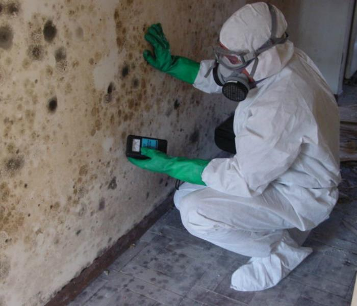 Intense mold cleaning job!